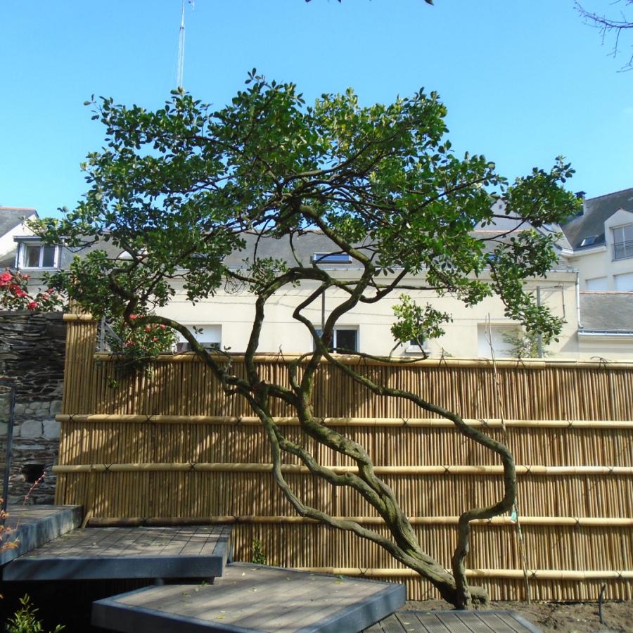 Kenninji gaki, barrière traditionnelle bambou jardin japonais, zen, clôture, palissade, séparation